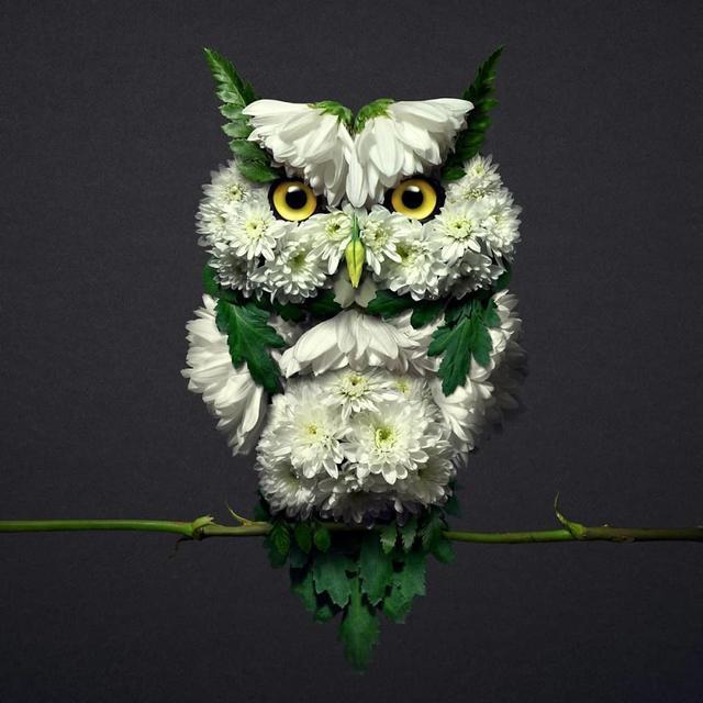 这几种小动物的配色图案,希望对您有帮助哦!