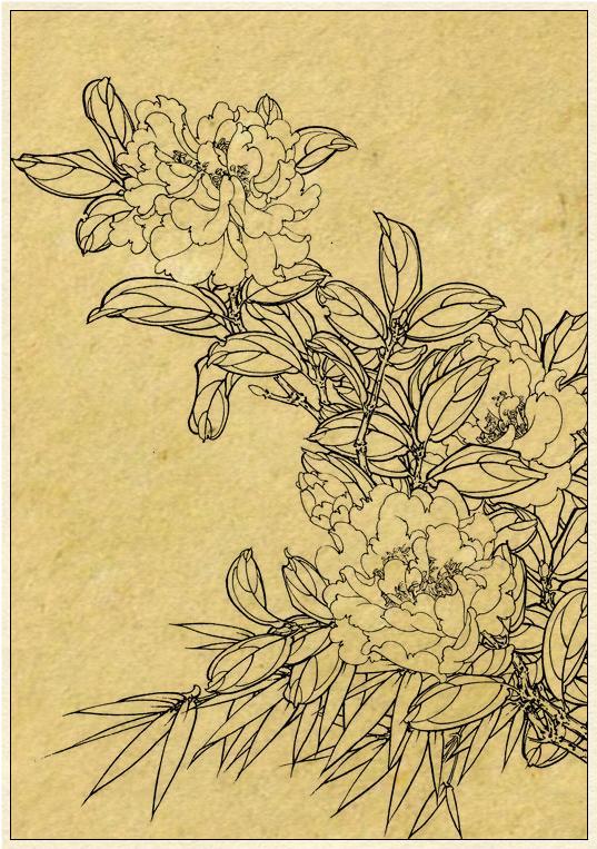 工笔线描竹子