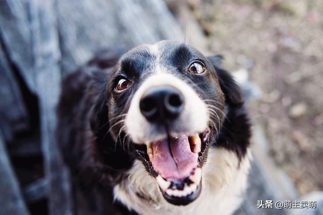狗狗身上长黑斑图片
