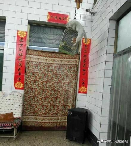 有一种猫咪是关不住的,请欣赏知名电影海报——喵申克的救赎-第2张图片-深圳宠物猫咪领养送养中心