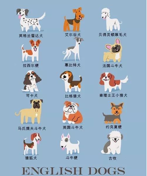 狗狗品种大全及图片 178个品种萌翻你的眼_男人窝