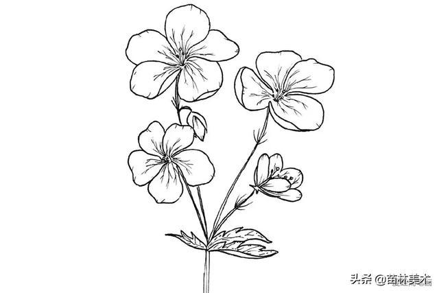 简单好看的花儿简笔画 带详细步骤 一起来学画画