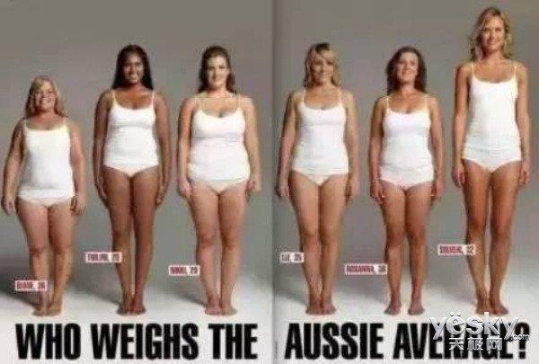 脂肪和肉对比图