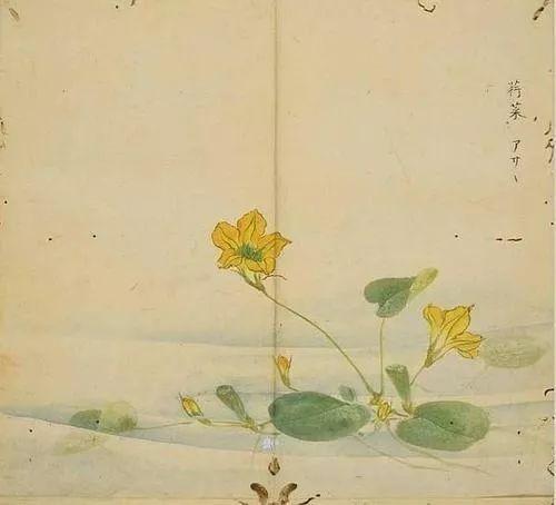 诗经植物手绘