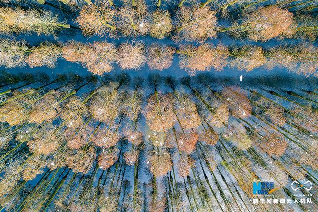 涨渡湖湿地森林公园