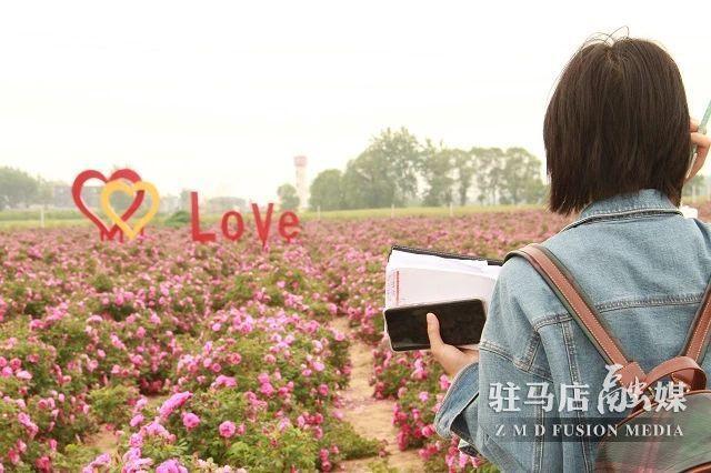 紫玫瑰花图片大全大图