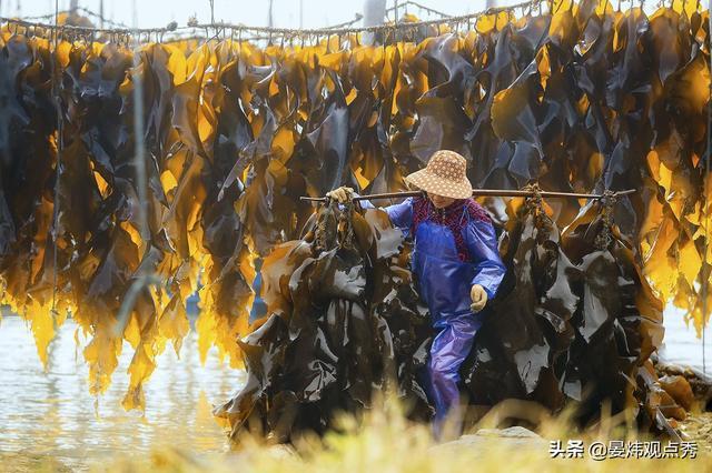 吃货灵魂拷问 海带为啥打个结