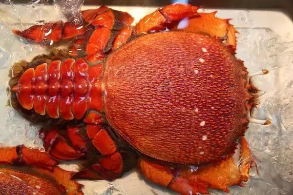 【梭子蟹】的功效与作用_【梭子蟹】的营养价值_食材百科_美食杰