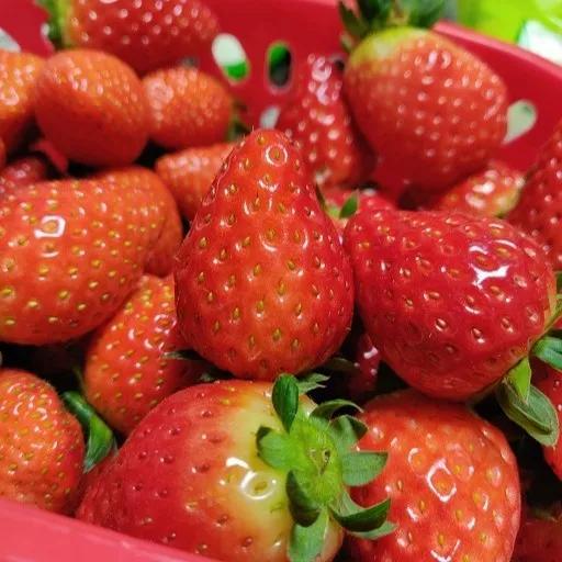 草莓图片可爱
