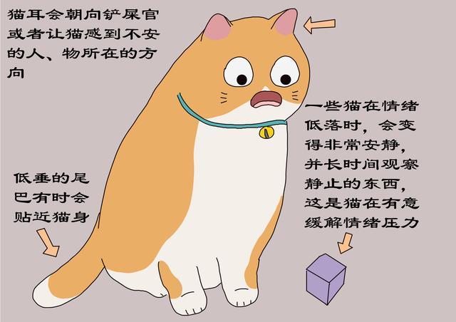 猫不开心时,铲屎官别增加猫的压力,避免3种与猫接触方式-第3张图片-深圳宠物猫咪领养送养中心