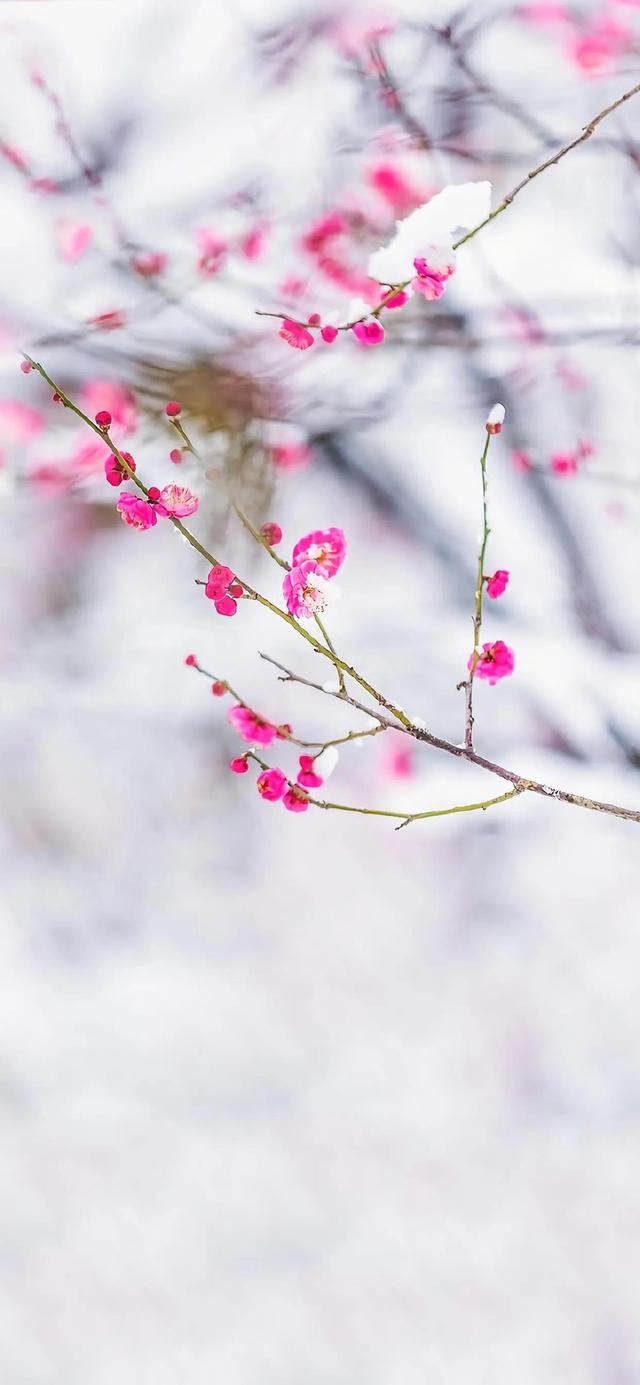 风景花朵手机壁纸