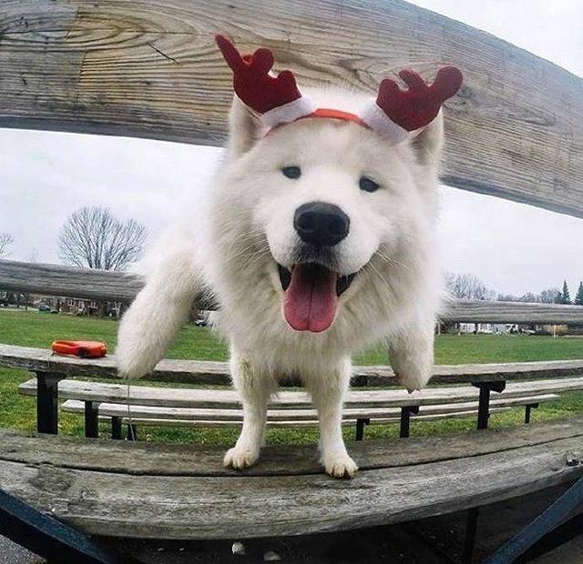 【狗狗头像】要积极 乐观 笑对生活 ???魔方甜点壁纸