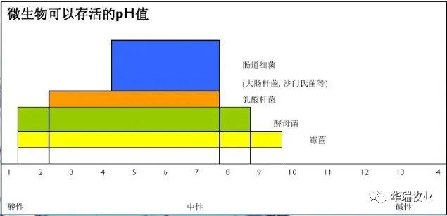对苯二甲酸乙二酯结构