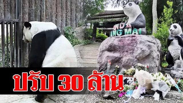 泰国野生张慧敏艺术