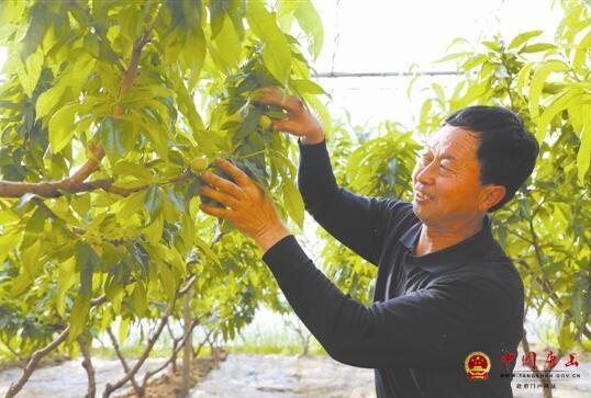 河北唐山:十亩大棚种瓜果 年纯收入十五万
