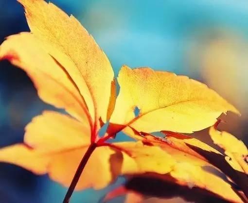美到窒息的100首现代诗 每天读一读 提升你的内涵与气质