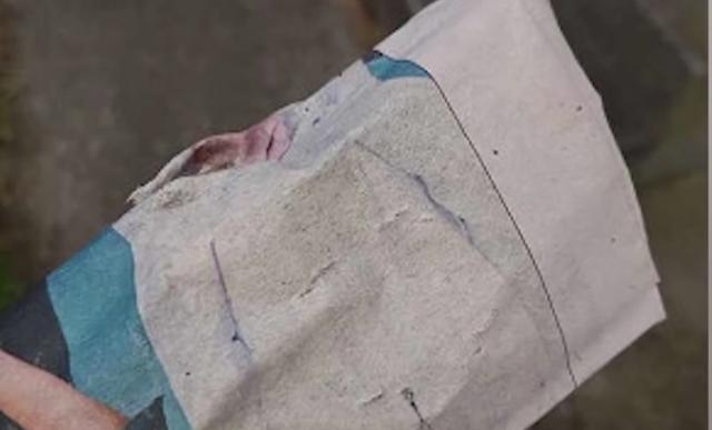 """猫咪派送报纸,报恩""""盗窃"""",主人:根本没有订阅报纸-第1张图片-深圳宠物猫咪领养送养中心"""