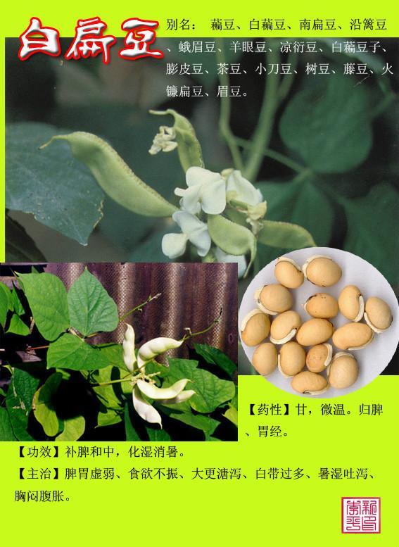 农村常见100种野菜柳