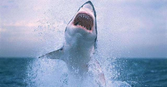无鳔的鲨鱼|文学|文学书籍推荐|散文|散文诗集免费下载荔枝