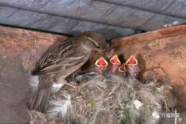 世界珍稀动物保护日,中国的珍稀濒危动物大全