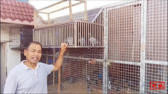 鸽子笼跳门制作图片
