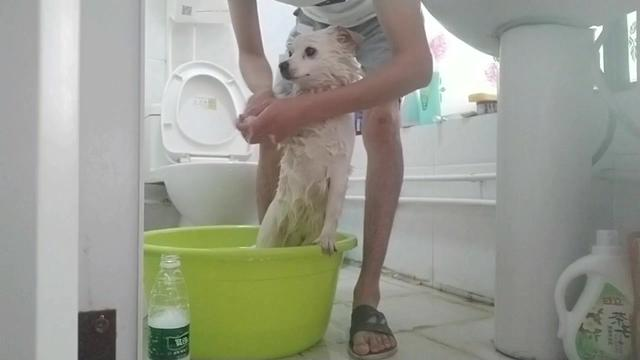 兜兜的顶级至尊Vip洗澡按摩一条龙服务