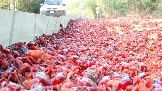 红螃蟹怎么做才能吃_360问答