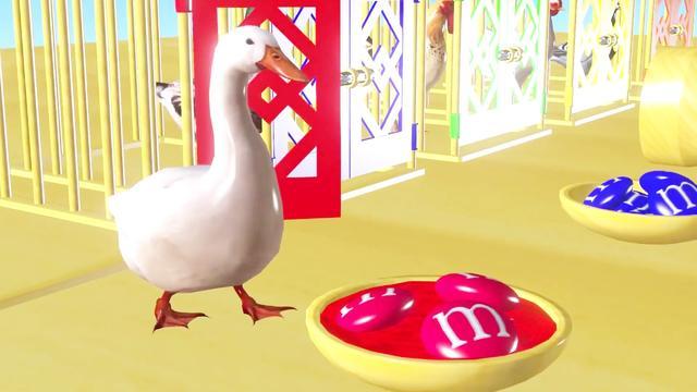 鸭子和鹅的脚区别图片