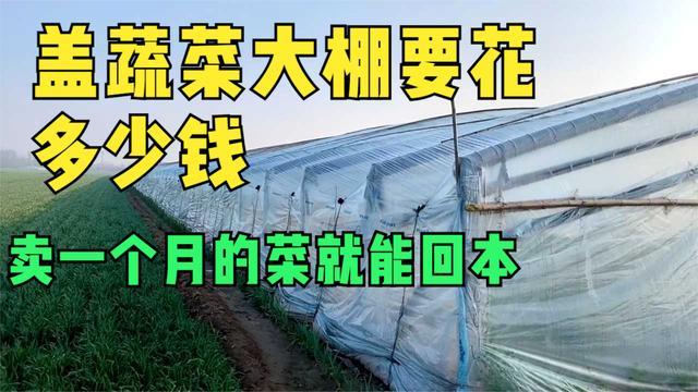 一亩阳光板温室大棚造价价格 附温室大棚造价表)_八方资源网