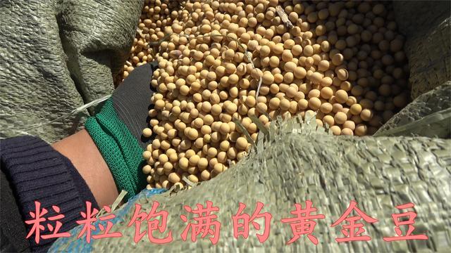 小型黄豆收割机