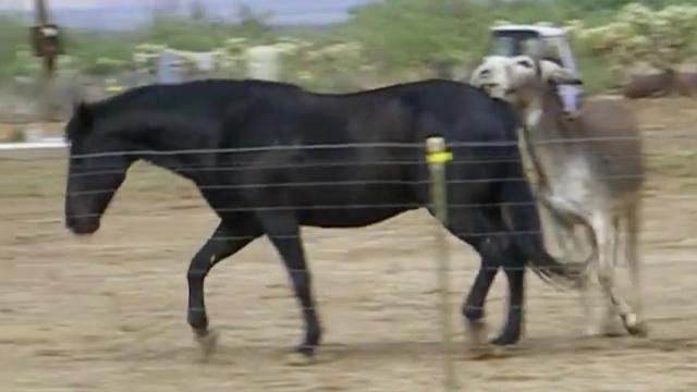 小村妇看上自家的驴
