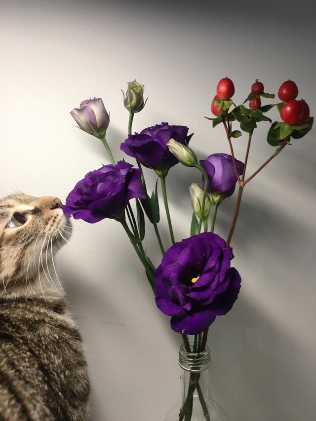 """""""心有猛虎,细嗅蔷薇""""这么文艺,但你知道它的下一句有多经典吗"""