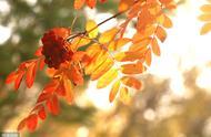 秋分过后脾胃易受寒,多做3件事多吃6种食物,让你健康过一秋