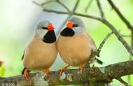 描写春鸟的诗句