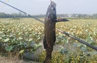 野钓七星漂更敏捷的使用方法和调漂技巧,学会渔获起码翻两倍!