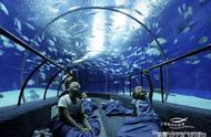 描写上海水族馆的成语