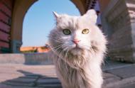研究发现猫比25年前胖了,看着故宫的猫,信了