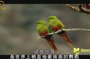 河狸筑起水坝,火地岛土地洪水泛滥,树木无法生存,鹦鹉也遭了秧