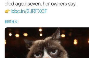 【表情包不爽猫去世,享年七岁】