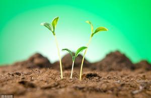 值得播种在心里的财富种子:成功日记