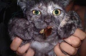 不缺吃不缺喝,猫咪吃虫子对得起我的钱包吗?