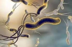感染了8亿国人的幽门螺旋杆菌!怎么办?一文终结所有疑问