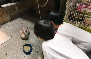 林志颖娇妻陈若仪晒儿子照片,这个动作暴露双胞胎性格差异