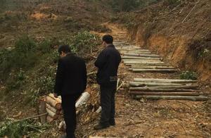 承包地种桉树引发的争议:阻挠砍伐7人被抓,一人刑拘期内死亡