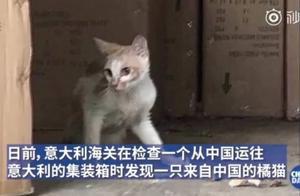 弱小可怜又无助:中国小橘猫被误关集装箱运到米兰