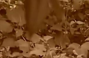 女初中生庆生被4男带到野外树林里强奸 又带到家中轮奸
