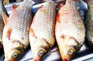 当心!哈尔滨这家超市鲫鱼抽检不合格,长期吃可引起胃肠道刺激或不适