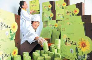 小小蒲公英成就致富梦!沾化东刘村村民刘学军将这项产业做起来了