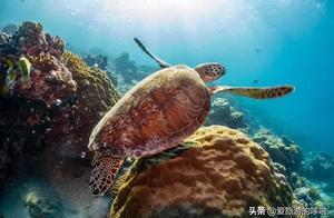 在沙滩踩一脚坐牢5年罚51万?为什么要伤害龟龟……