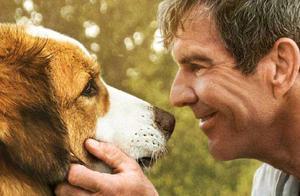 距离上映只有一周才定档!《一条狗的使命2》内地上映同步北美